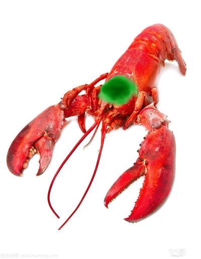 有约龙虾的吗?什 ..